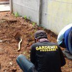 perusahaan gardening